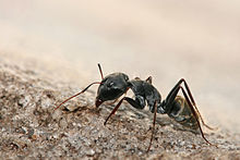 FAQs about Carpenter Ants from Steve's Termite and Pest Control in Sarasota, FL