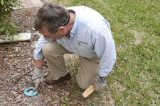 Termite Pest Control is Chemical Free Termite Pest Control for Sarasota to Clearwater, Florida