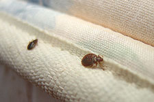 Eliminate Bed Bugs with Natural Bed Bug Formula Guaranteed Effective and Safe for Sarasota, Florida