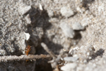 Identify and Kill All Types of Ants with Steve's Pest Control Service in Sarasota and Bradenton, Florida