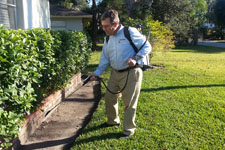 Pest Control Prevention Treatment for Your Home to Prevent Pests and Rodents in Clearwater, FL